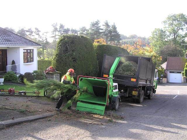 tree removal crew cutting and grinding down branches