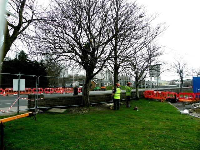 emergency crew assessing a broken damaged tree