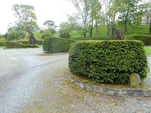 curved hedge design for local council Letterkenny