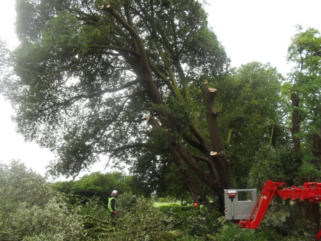 tree surgery equipment removing tree safely